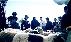 Sheep on sale for Eid al-Adha