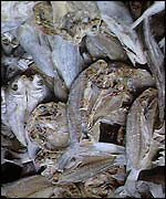 Fish killed by pollution