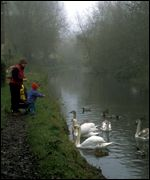People feeding swans in canal   British Waterways