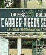 Orissa carrier pigeon headquarters in Cuttack