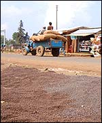 Cart laden with coffee beans rolls past coffee beans drying in a Paksong street