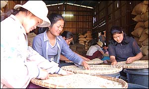 Women in a Paksong coffee warehouse sift beans by hand