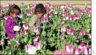 Children in poppy field