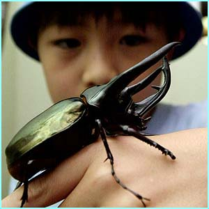 The aptly named giant beetle!