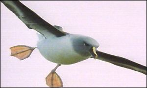 Albatross (Vt freeze frame)