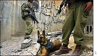 Israeli troops patrol Jenin with sniffer dog