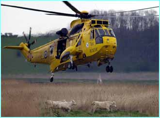It's only a matter of time though until the cows are ready for the helicopter
