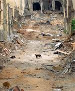 Cats in the ruins of the Jenin camp