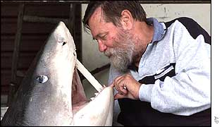 Fisherman Bob Van Lawick looks into the mouth of the tiger shark containing human remains
