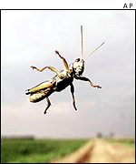 Grasshopper on windscreen   AP