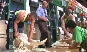 New Zealand sheep shearing championships