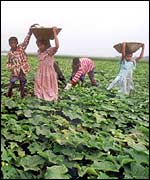 Children working in farm fields