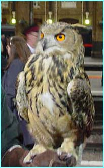 Owls, along with other animals, were brought in to entertain the crowds while they waited for the train