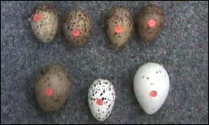 Some of the stolen eggs