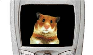 Hamster on mobile phone screen, Anthropics