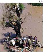 Flood victims round tree   AP