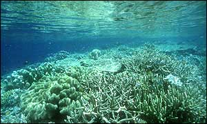 Sallow coral reef Copyright Conservation International