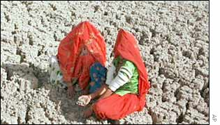 Women check a parched field
