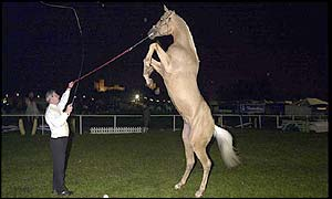 Tom Roberts rehearsing with Jewel, one of the Liberty horses from Zippos Circus