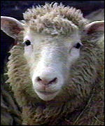 [ image: Dolly the sheep: proved cloning was possible]