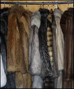 [ image: Luxury furs for leper colony]