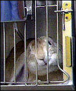 [ image: Rabbits, rats, cats, dogs and monkeys are all used for experiments]