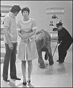 [ image: Blue Peter in 1969: Valerie Singleton and Peter Purves meet Lulu the elephant]