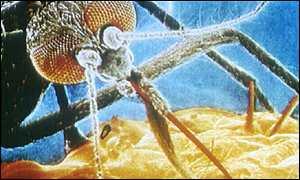 Op 02 26 gmt gesondheid malaria geteiken deur gene entstof