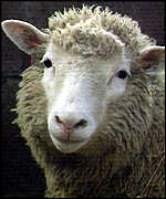 [ image: Dolly the sheep: Proof of advanced cloning technology]
