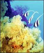[ image: Reefs - like this one off Fiji - face growing acidity]