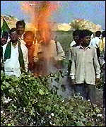 [ image: Fearful Indian farmers burn GM crops]