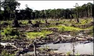 Tropiese woude: 11m hektaar vernietig 'n jaar