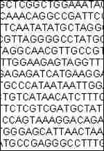 [ image: Part of P abyssi's ATGC genetic code]