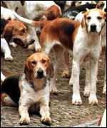 [ image: Hounds mean less cruelty, says hunt supporters]