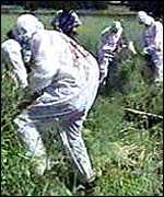 [ image: Friends of the Earth has campaigned hard against GM trials]