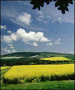 [ image: Scientists are breeding oilseed rape which produces many useful chemicals]