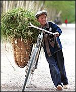 boy with bicycle carrying feedgrain
