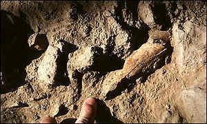 This Neanderthal thigh bone was smashed open for its marrow.