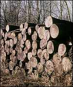 [ image:  . . . but forestry in northen Europe may benefit]