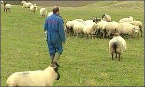 graham brown and sheep