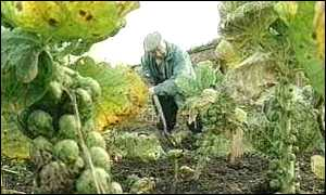 image: [ Allotments: 200,000 have been lost in 25 years ]