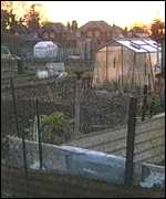 [ image: Sunset for allotment holding?]
