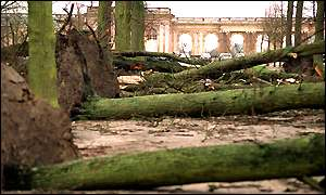 Trees downed in Versailles
