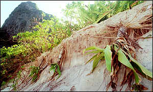 Damaged trees on Maya Bay, November 1999