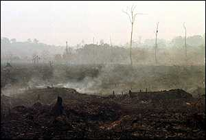 image: [ An area the size of Belgium has been damaged by fire ]