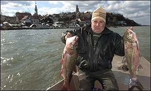 Belgrade boatman displays poisoned fish in Danube