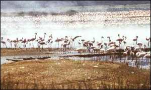 A soda lake and home to many of the world's flamingoes