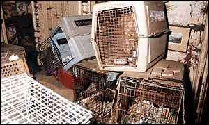 cruelty shown to the animals 300 to 400 words The turkish animal welfare bill from 2004 that was implemented in we neuter around 300-400 animals each year the western world hates cruelty to animals.