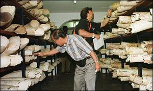 Ivory auction