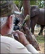 Taking aim: Hunter targets elephant in Zimbabwe